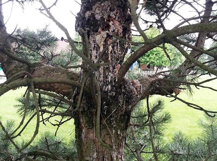 tree-service6