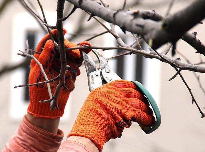 tree-service7